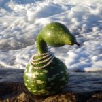 Surf Gourd © Photography by David Piemonte