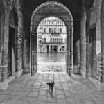 Venezia Cat © Photography by David Piemonte